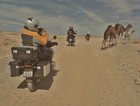 Motorcycles and Camels